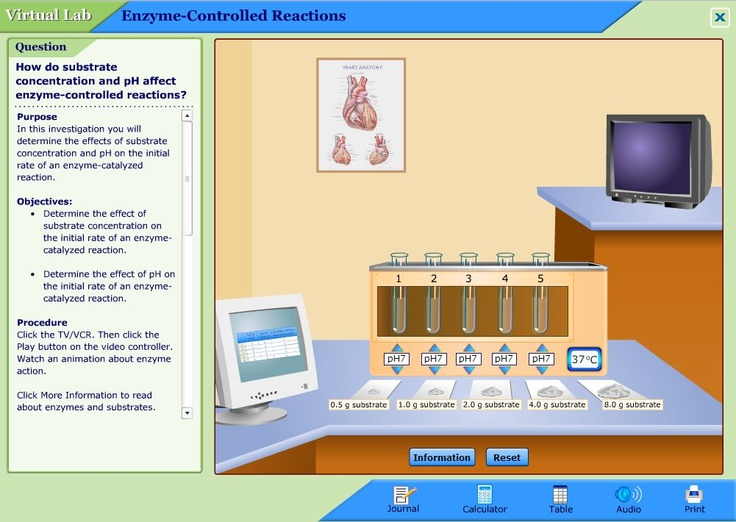 Biology Online Labs - Fun & ENJOYABLE SCIENCE LEARNING